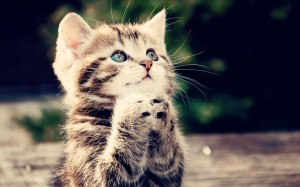 cat-praying